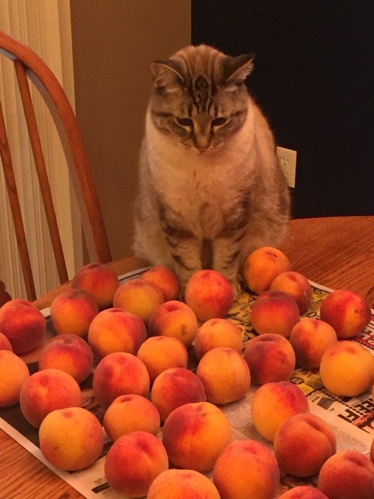 """Картина """"Кот с персиками!!!"""""""