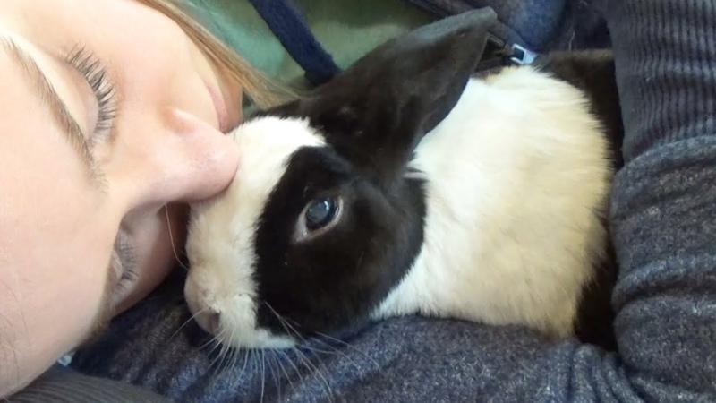 Pipkin rabbit has passed
