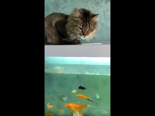 Video by БФ защиты животных и природы «Ангел бережёт»