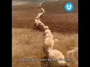 Kokpar.kazygurt-20210302-0003.mp4