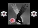 Tony Enaru - Angela Ciochina - Dă-mi mâna prietene. . _ Facebook.mp4