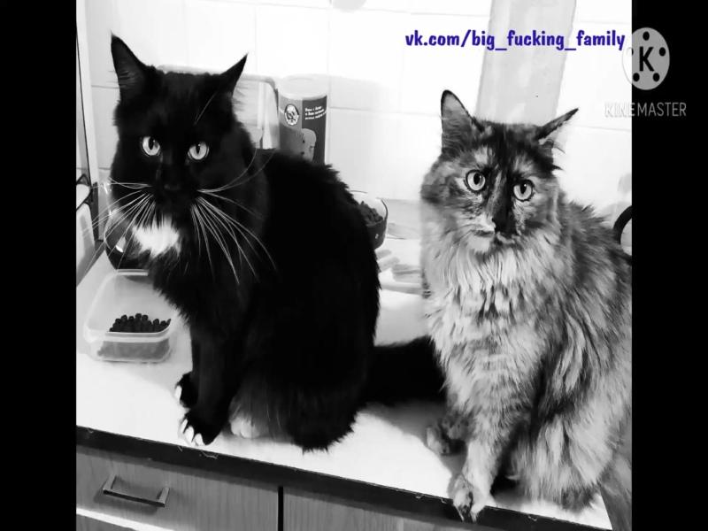 Когда в семье живут дружно... Смешные животные