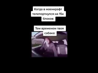 #мем #юмор #маен #жиза собака:гонщик нереальный