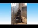 УГАРНЫЕ ЖИВОТНЫЕ _ Смешные видео про котов и собак..mp4