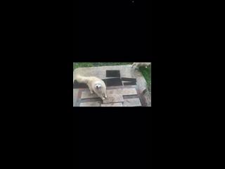 Видео от Полины Полищук