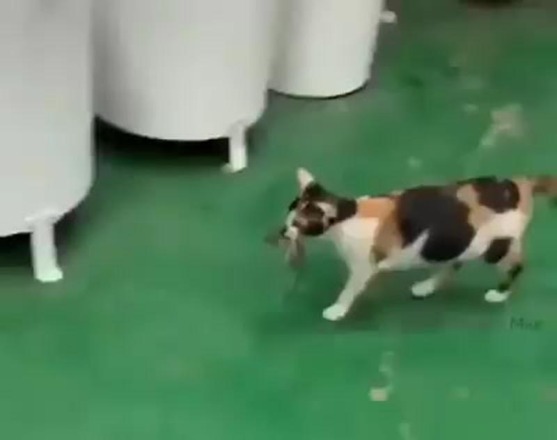 Кошка которая кормит мышку