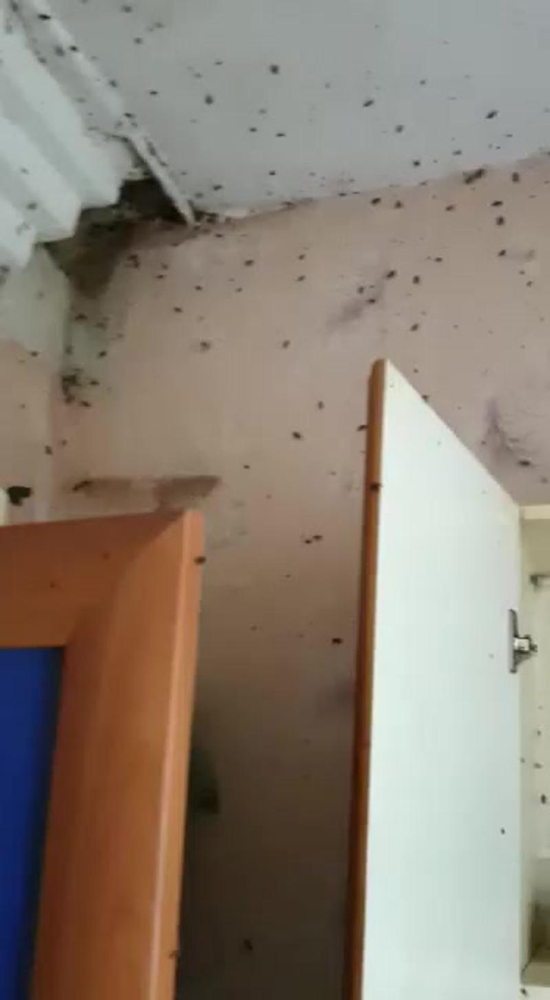 Уничтожение тараканов | Дезинсекция квартир