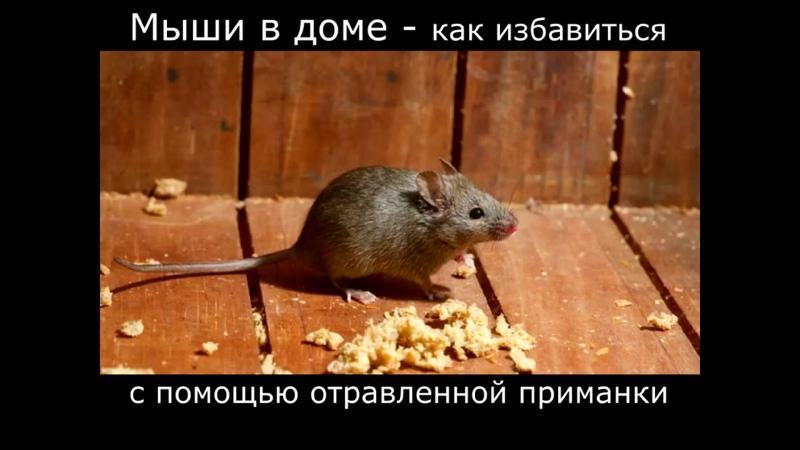 Как избавиться от мышей в доме. Пример из практики