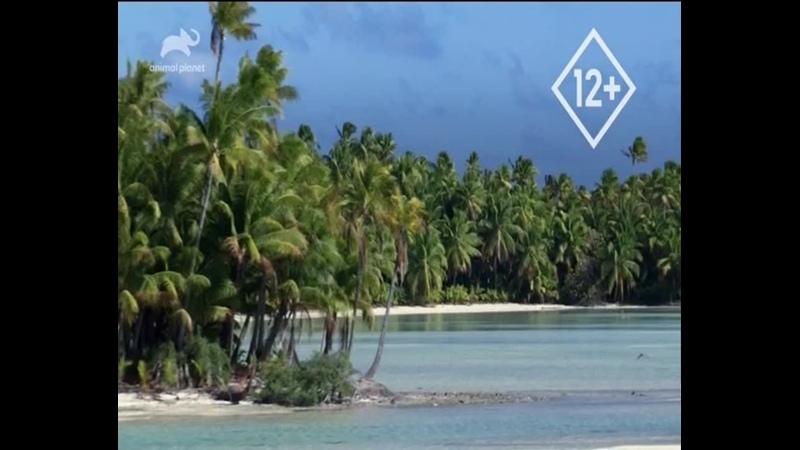 Animal Planet ᴴᴰ Неизведанные острова Индонезии Страна вулканов