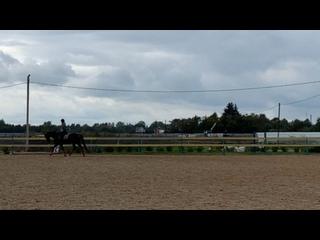 Видео от Horse Diary Beyond two souls