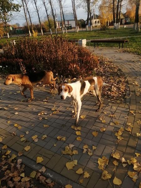 Доброго времени суток.  В Русской Буйловке бегают 2 собаки. Может убежали у кого…  Анонимно, пожалуйста.
