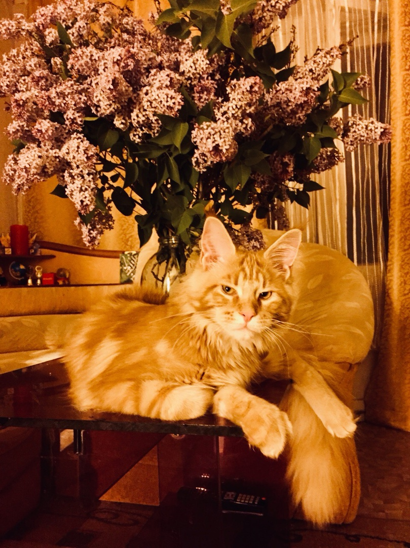 фото из альбома Юлии Синициной №2