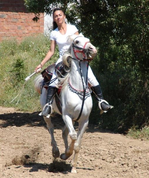Horse ladies riding cruel The Scandalous