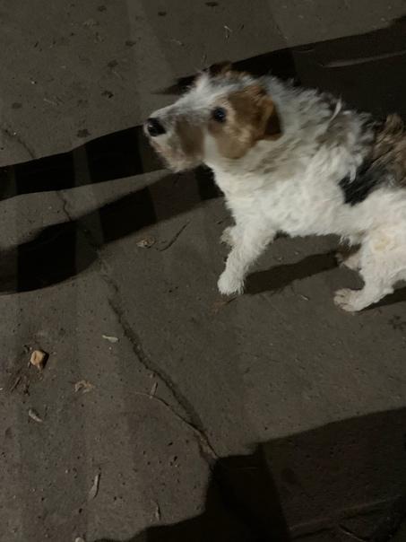Может кто терял собаку? Очень ласковая, чистая, хр...