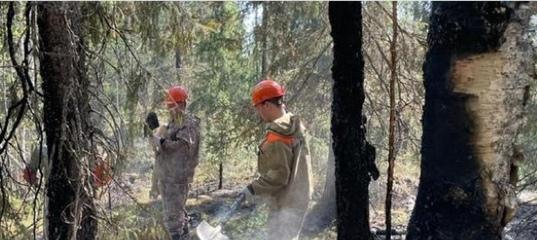 Леса Архангельской области закрыли для посещения