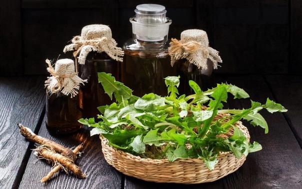 Рецепты здоровья: корень одуванчика против атеросклероза