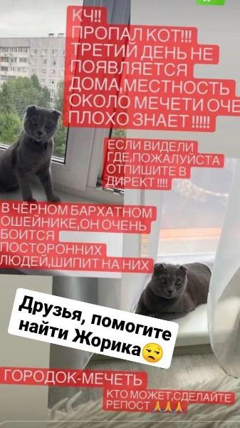 Помогите найти!!Зовут Жора.Кот домашний, пугливый ...