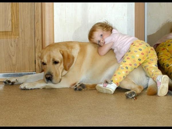 ТОП 10 САМЫХ ДОБРЫХ СОБАК В МИРЕ TOP 10 MOST GOOD GOOD DOGS IN THE WORLD Породы собак