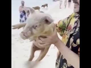 Филипп Киркоров с детьми на Багамах