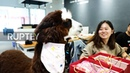 It's alpaca time! - adorable pet brings joy and novelty into Chinese office