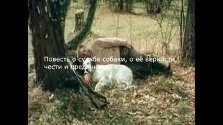 «Буктрейлер по книге Г. Троепольского «Белый Бим черное ухо»