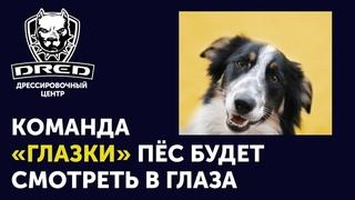Что такое команда ГЛАЗКИ | Как научить собаку | Где применять | Дрессировка собак Буча Ирпень