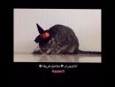 Умный кот Смешное видео