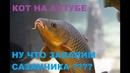 САМОЕ ЛУЧШЕЕ,ПРИКОЛЫ,,РУССКАЯ РЫБАЛКА 4 ,ИГРЫ,game,rr4симулятор,РР4,russian fishing 4.gamefishing,
