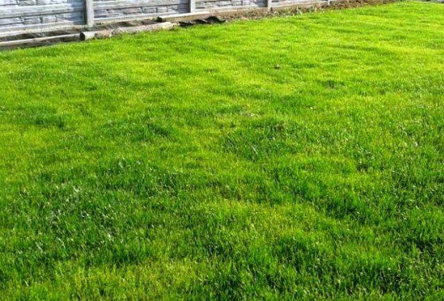 Как правильно стричь газон, изображение №9