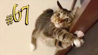 ПРИКОЛЫ С ЖИВОТНЫМИ 😺🐶 Смешные Животные Собаки Смешные Коты Приколы с котами Забавные Животные #67