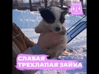 Зайка — самая жизнерадостная собака на трех лапках