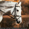 ♞Horse is the melody of my soul♞