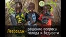 Лесосады решение проблем голода и бедности