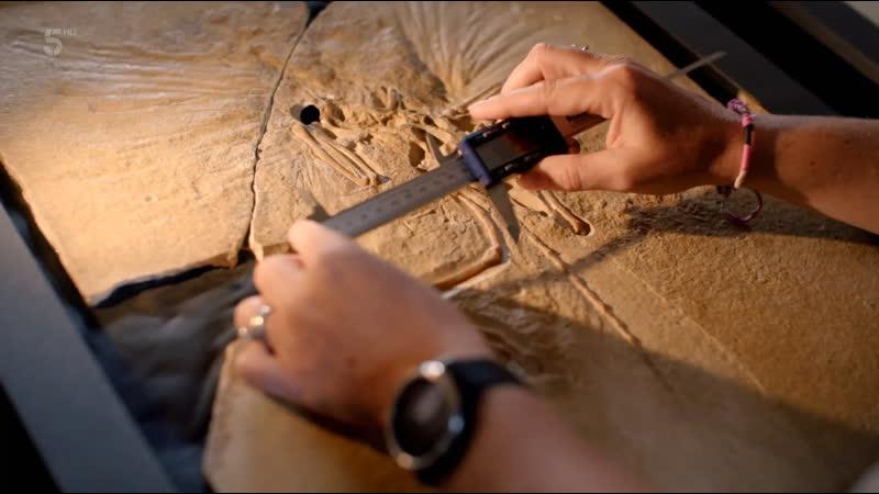 Natural History Museum World of Wonder Season 1 Episode 1 Channel 5 2021 UK ENG SUB ENG