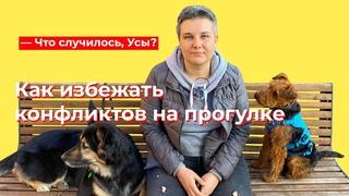 Что случилось, Усы? Как избежать конфликтов на прогулке с собакой?