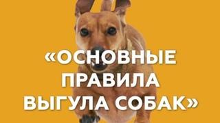 ВЕБИНАР Основные правила выгула собак