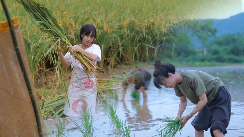 月儿圆圆,稻米飘香,正逢农家收谷忙Full Moon Fragrance of Ripe Rice Farmers Busy Harvesting Crops Liziqi Channel