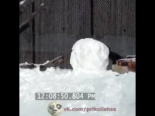 Панда отрывает голову снеговику