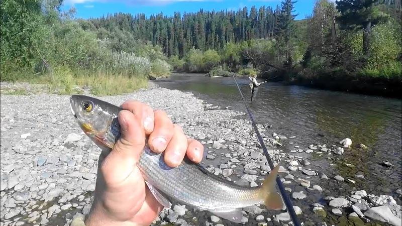 Рыбалка Я думал мне это все СНИТЬСЯ Ловля ХАРИУСА в ТАЙГЕ СИБИРСКАЯ Глухомань На ТИРОЛЬКУ ЖОР